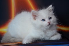 White-Panther-10weeks-old_14.jpg