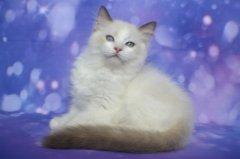 Xaver-11-weeks-old6.JPG